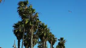吹的棕榈树风 影视素材