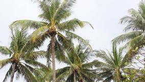 吹的棕榈树风 股票视频