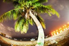 吹的棕榈树 免版税库存照片