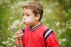 吹的男孩蒲公英小的种子 免版税库存照片