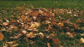吹的秋天黄色叶子 影视素材