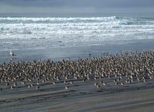 吹笛者沙子海鸥 库存照片