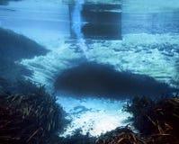 吹管斯普林斯洞- Merritts磨房池塘 免版税库存图片