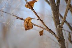 呈杂色的叶子 免版税库存照片