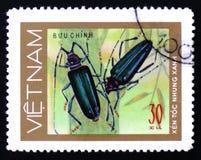 呈杂色的蓝色甲虫伐木工人, 30枚硬币,大约1981年 免版税库存图片