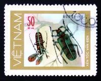 呈杂色的绿色甲虫伐木工人,大约1981年 图库摄影