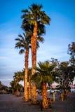 呈绿色扇叶树头榈棕榈树在尤马,亚利桑那 免版税库存照片