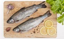 呈虹彩的鳟鱼 免版税库存照片