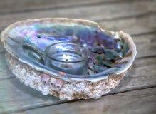 呈虹彩真珠色的贝壳 免版税库存照片