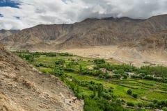 呈绿色季节在Leh市, Ladakkh,印度 库存照片