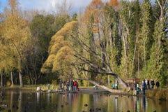 周末在有鸭子围拢的家庭的公园 免版税库存照片