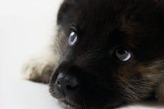 周道的小狗 免版税库存图片