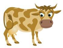 周道的母牛 免版税图库摄影