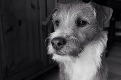 周道的狗 免版税库存照片