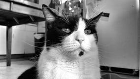 周道的猫 免版税库存图片