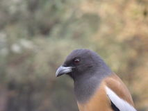 周道的鸟 库存照片
