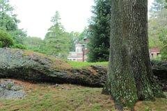 周围的树 免版税库存图片
