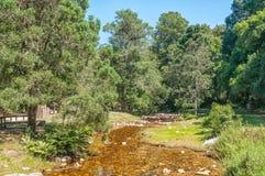 周年纪念小河野餐斑点 库存图片