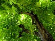 呼吸的绿色叶子屋顶 库存照片
