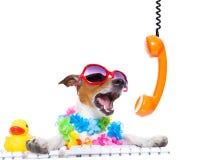 呼喊在电话的狗 库存照片