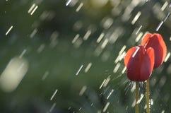 命中雨 免版税图库摄影