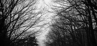 致命的万圣夜树 免版税图库摄影