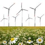 延命菊的领域与风轮机的 免版税库存图片
