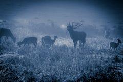 咆哮在月光的庄严公牛 免版税图库摄影