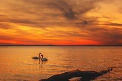 咆哮在海的五颜六色的太阳 免版税库存图片