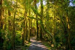咆哮的比利跌倒轨道,位于Mt令人想往的国家公园,新西兰 免版税库存照片