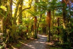 咆哮的比利跌倒轨道,位于Mt令人想往的国家公园,新西兰 图库摄影