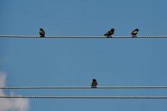 和休息坐电导线的鸟 免版税库存图片