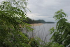 水和叶子 免版税库存照片