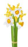 黄水仙和含羞草花 免版税库存图片
