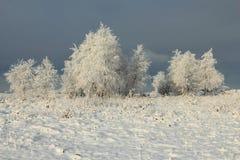 冻和多雪的树 免版税图库摄影