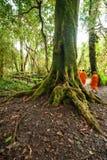和尚在有薄雾的热带雨林泰国里 免版税图库摄影