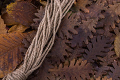 绳索和干燥叶子作为秋天背景 库存照片