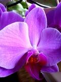 和平与爱情紫色 免版税库存图片