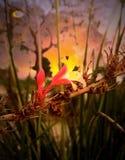 和平与爱情 免版税图库摄影