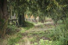 和平和平静在公园长椅 免版税库存照片