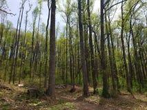 和平在森林 库存照片