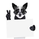 和平手指狗 库存照片