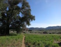 和平的冠足迹,南加州 库存图片