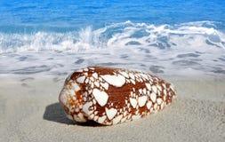 和平的唯一蜗牛 免版税库存照片