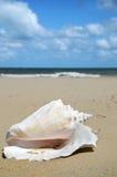 和平的唯一蜗牛 免版税库存图片