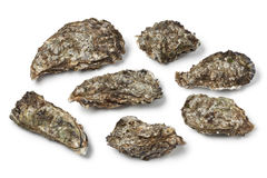 和平的牡蛎 库存图片