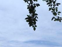 和平纯净的天空  库存照片