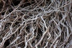 死和扭转的死的树枝 免版税库存图片
