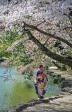 和服的一年轻女人在樱花下 免版税图库摄影