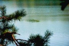 水和杉树分支 免版税库存图片